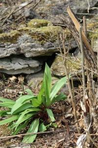 plantedbywall