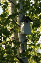 birdhousebirch