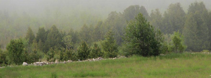 cropped-walli-n-fog.jpg